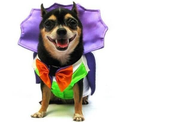Antes de escolher a fantasia para o cão, confira se ela é confortável e segura