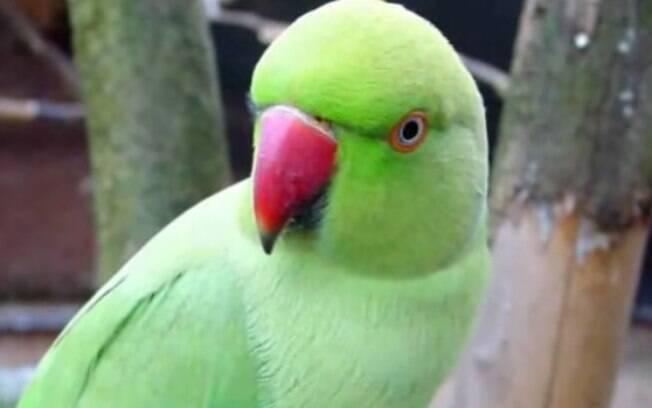 Papagaio identificado como Hariyal foi obrigado a depor para a polícia após ofender idosa