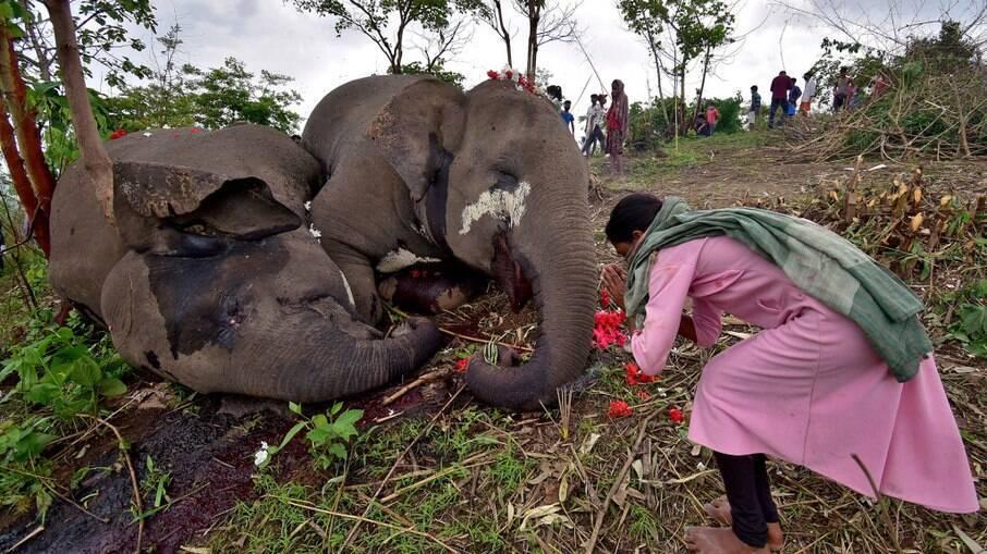 Uma mulher ao lado das carcaças dos elefantes asiáticos mortos na Índia