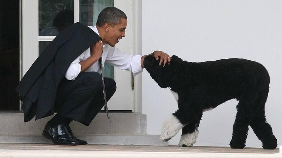 Morre cachorro de Barack Obama, Bo