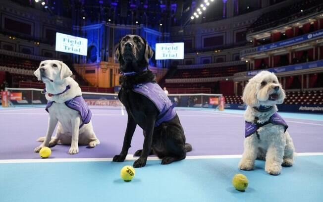 Tina, Melvin e Hattie são cães-guia de ONG que ajuda pessoas com deficiência física a se locomover com os pets