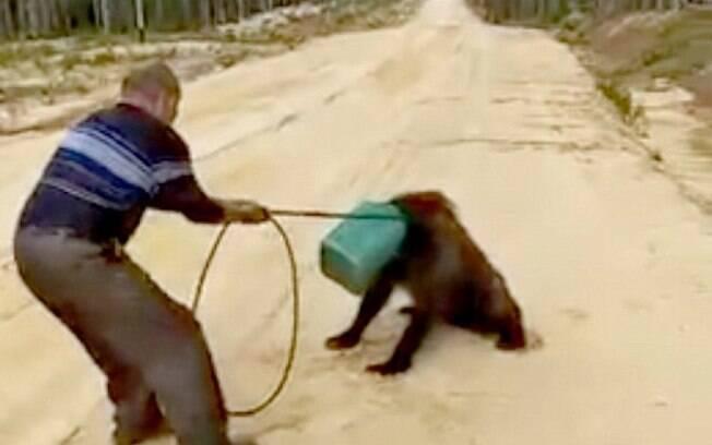O homem usou a roda de uma bicicleta para tentar libertar o urso, que corre risco de morrer com a lata na cabeça