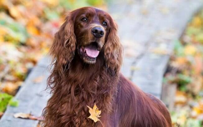 Como saber se a pancreatite em cães afetou seu pet? Entenda os sinais