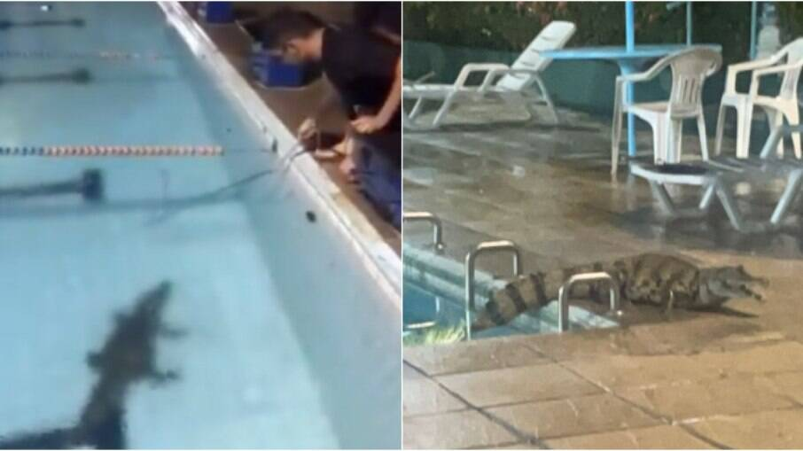 Jacaré surpreendeu funcionários ao aparecer em piscina de clube em Manaus