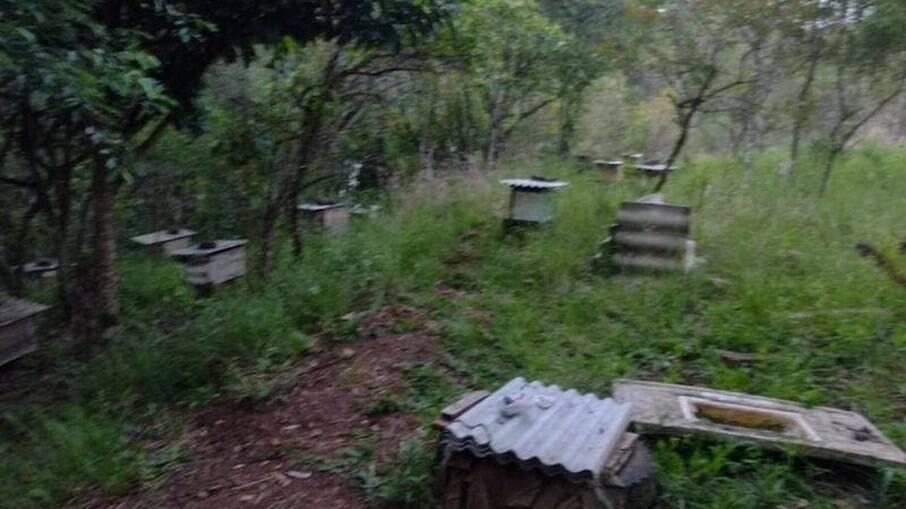 Idoso foi encontrado morto após ser atacado por enxame de abelhas