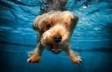 Tudo que você precisa saber sobre a natação canina