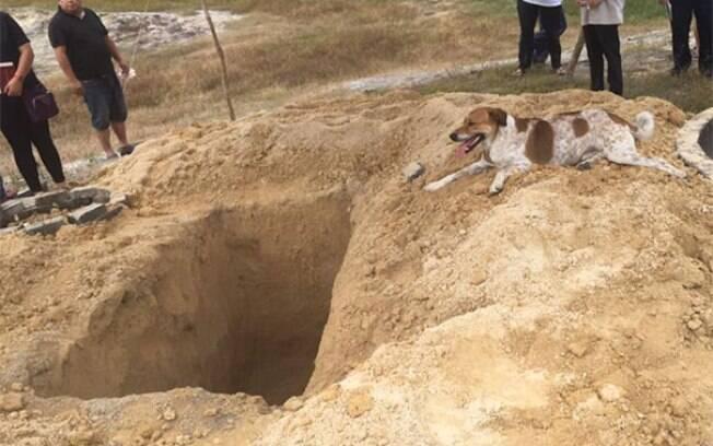 Cão segue funeral de tutora e mostra o quanto é leal