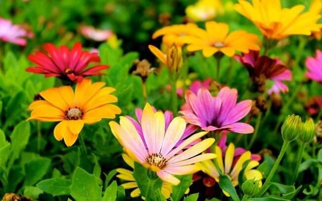 Simpatias especiais para aproveitar as energias da primavera