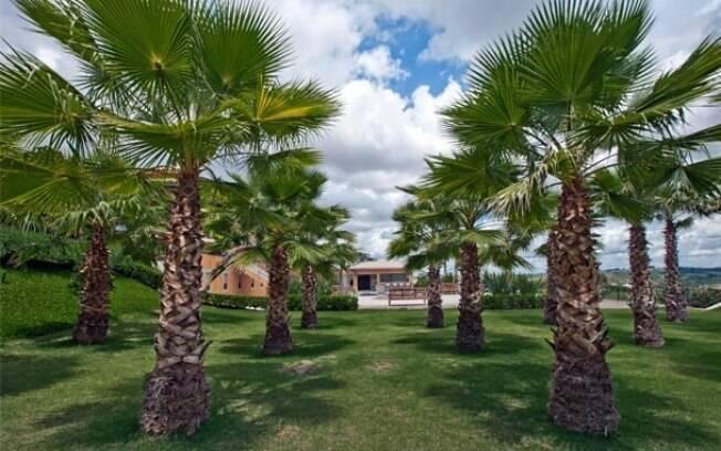 Marcelo faisal d dicas para deixar seu jardim mais bonito for 5 jardins de lucie