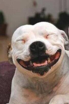 16 cachorros que entenderam exatamente o espírito da sexta