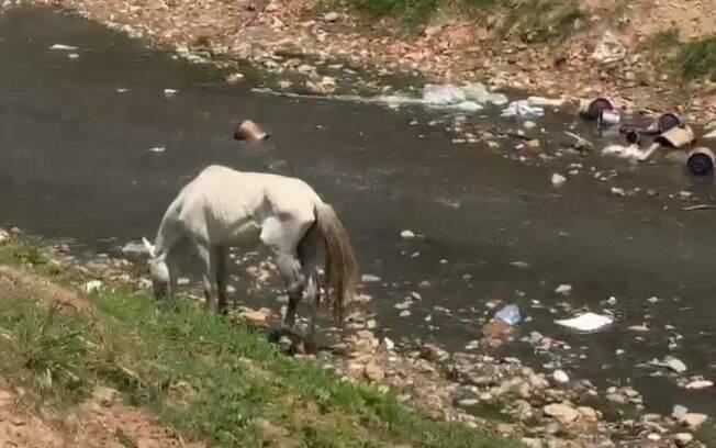 Moradores denunciam abandono de cavalo em córrego do Jd. Capivari