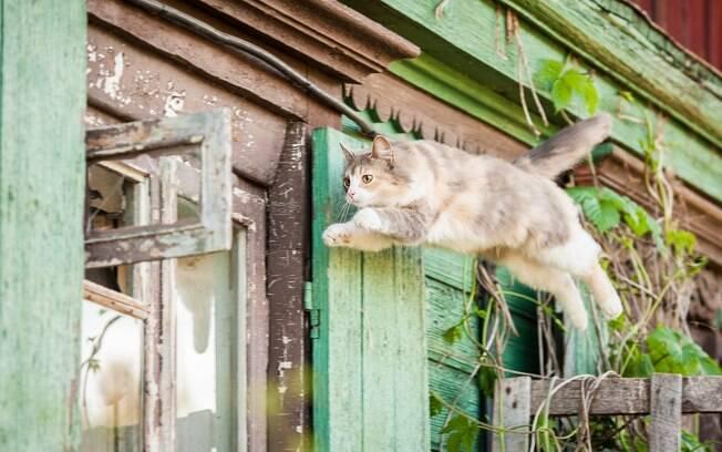 A Síndrome do Gato Paraquedista, também chamada de Síndrome do Gato Voador, é quando o animal salta de grandes alturas sem imaginar as consequências do seu ato