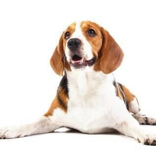 Beagle - undefined