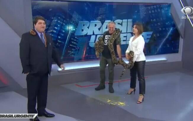 Durante a explicação de especialista, cobra urina e defeca no meio de programa ao vivo da Band