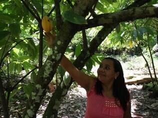 Artesanal:  Dona Nena colhe cacau em seu terreno, na ilha do Combu