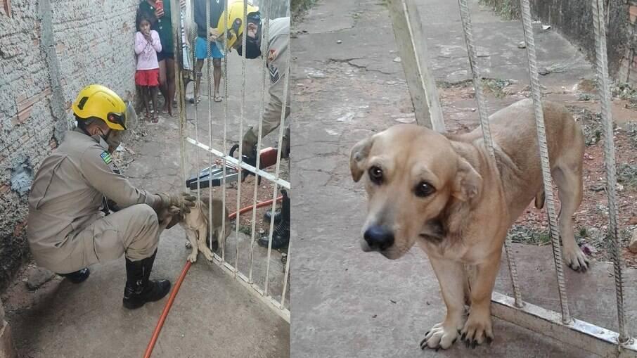 Bombeiros salvam cachorro preso em portão em Goiás