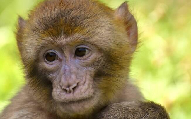 Os macacos foram executados em fevereiro de 2019