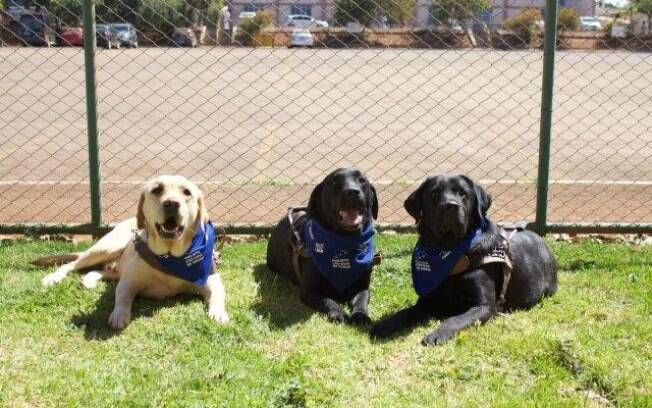 Os cães do projeto passam por inúmeras fases antes de sua atuação