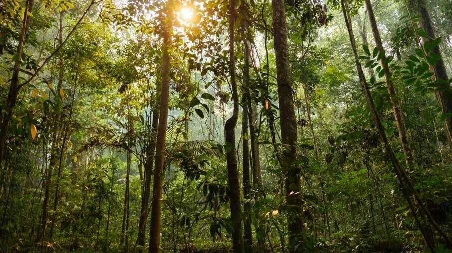 Bancos afirmam que Amazônia vale mais em pé do que derrubada
