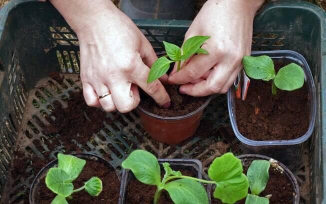 Ter uma mini-horta em casa exige cuidados, mas também garante temperos e hortaliças sempre fresquinhas