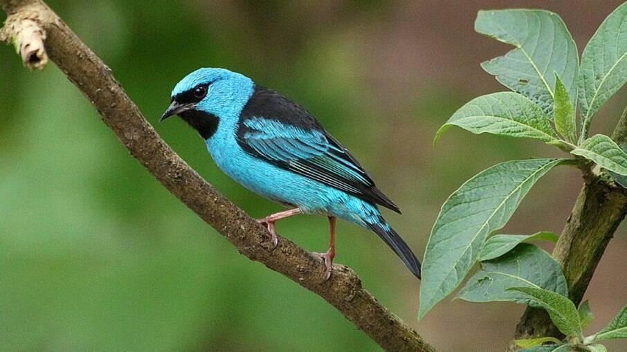 A seleção das espécies foi feita por uma comissão técnica da Semam