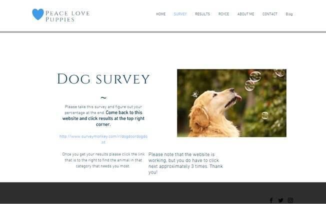Estudante desenvolve site para ajudar pessoas a saberem se devem ou não adotar um cão