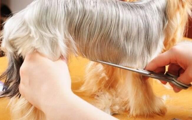 Veja quais os diferentes tipos de tosa e escolha a melhor opção para o seu pet