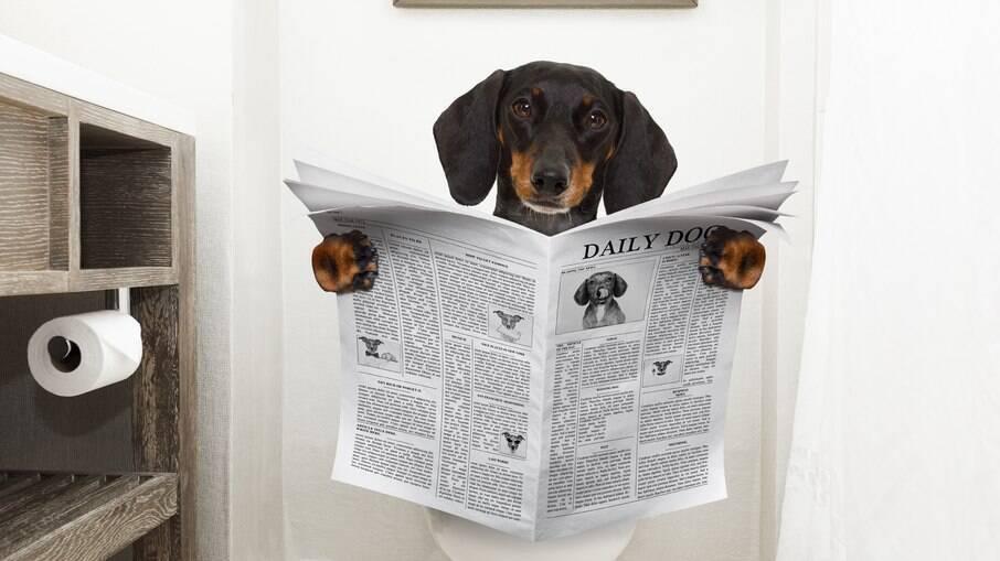 Os jornais não são tão uteis para os pets na hora de usar o banheiro