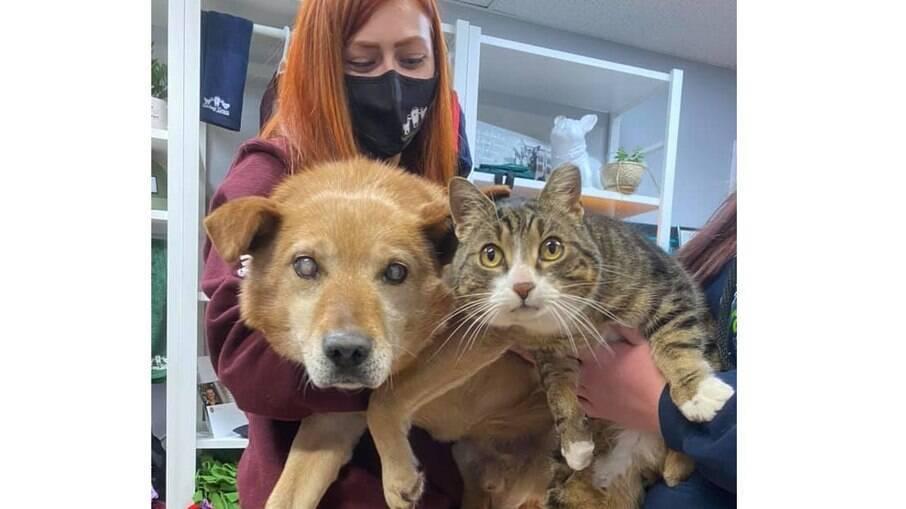 Spike e Max viviam nas ruas, até serem resgatados por um abrigo