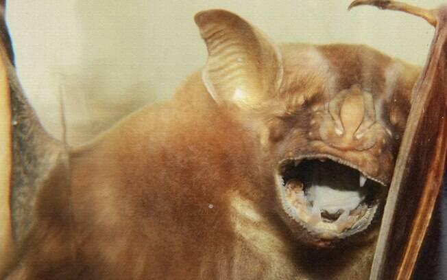 Prefeitura de Campinas confirma sete casos de raiva em morcegos e faz alerta