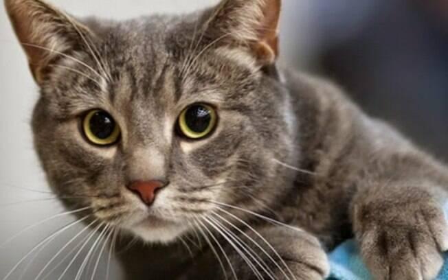 Muito curioso: descubra mais sobre a origem dos felinos!