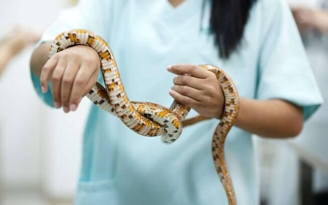 Cobra atendida na clínica veterinária AmahVet