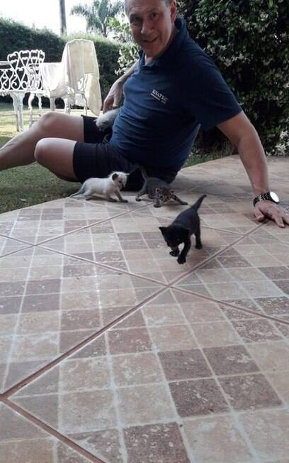 Filhotes de gato e pai de Ingrid