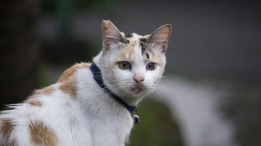 Guizos impedem que gatos ajam de acordo com os próprios instintos