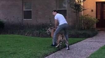 Tigre é flagrado caminhando e assusta moradores nos EUA