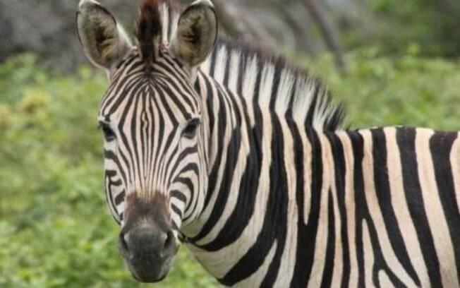 O Zoológico Internacional do Cairo está sendo acusado de pintas burros para se passarem por zebras. O caso veio à tona após um publicação no Facebook