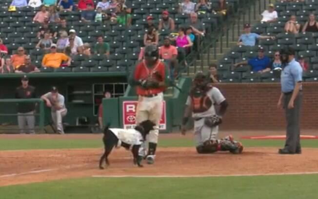 Cadela tenta roubar taco de jogador de baseball durante partida, mas foi só uma mal entendido