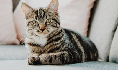 Entenda o que significam os sinais que os gatos nos emitem