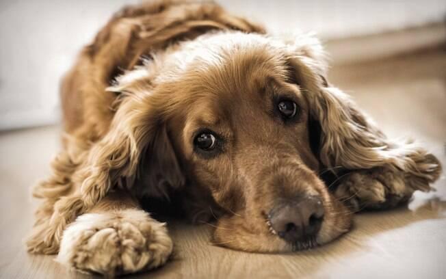 A aproximação com o animal de estimação na quarentena pode prejudicá-lo quando as coisas normalizarem