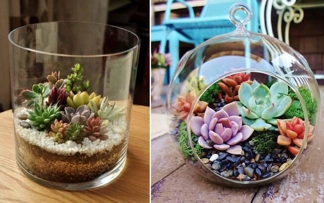 Fazer um terrário de suculentas coloridas e variadas é uma forma criativa de usar esse tipo de plantinha na decoração