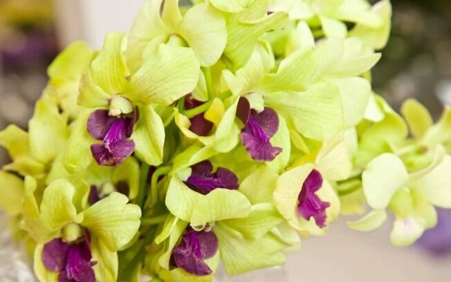 Orquídea Demphale será um dos destaques da feira que começa nesta sexta