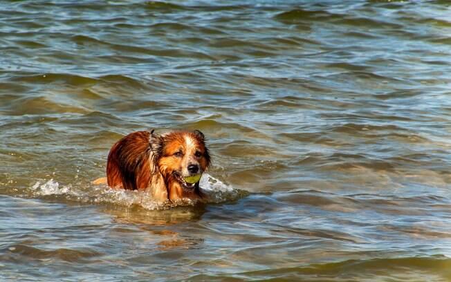 A dona de Hanz fez um alerta para outros donos de cães que gostam de brincar na água
