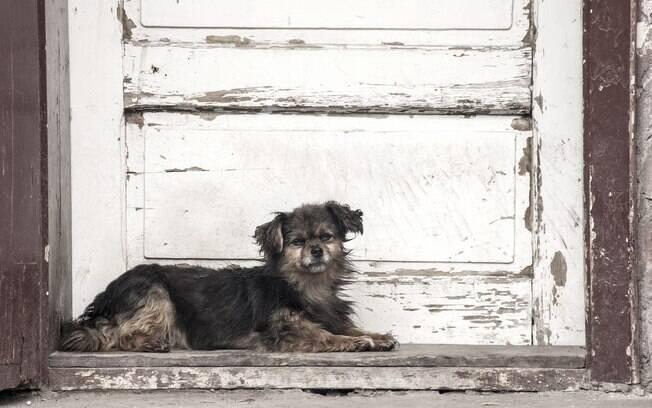 O Centro de Zoonoses tem o objetivo de controlar a população de animais de rua