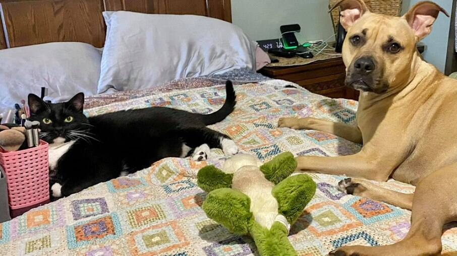 Henry, o gato Bogie e o jacaré de pelúcia que causou a situação
