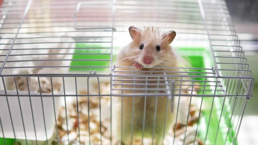 Hamsters são pequenos, mas precisam de uma gaiola espaçosa para atividades fisicas