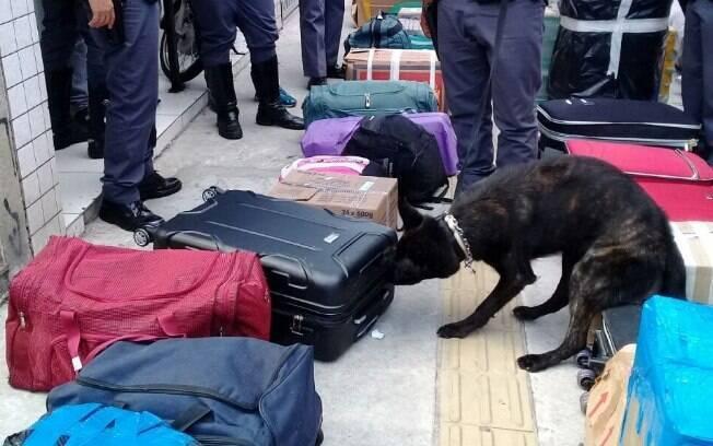 Cães Nitro e Dilan foram responsáveis pela apreensão da droga