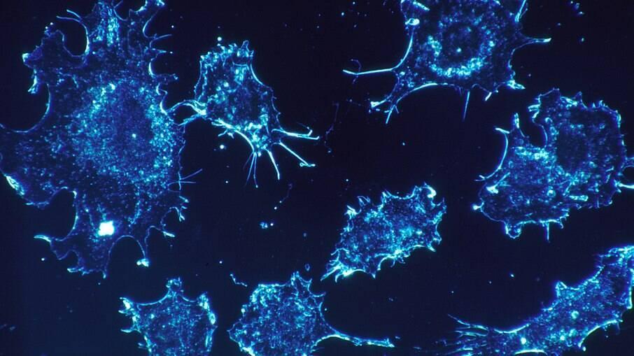 Covid-19: EUA identificam 2 pessoas infectadas com variante da África do Sul