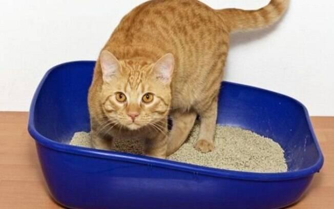 A caixa de areia é o item mais importante para o gato