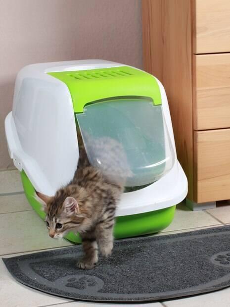 Entenda porque os gatos deixam suas caixas de areia e resolvem marcar território