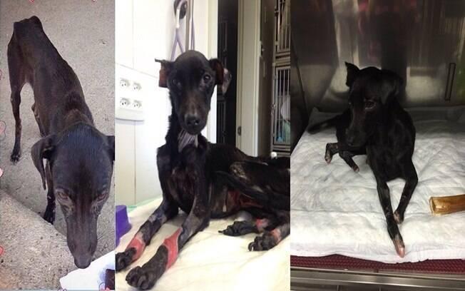 Elsa no dia que foi resgatada, durante o tratamento e já com as patinhas amputadas